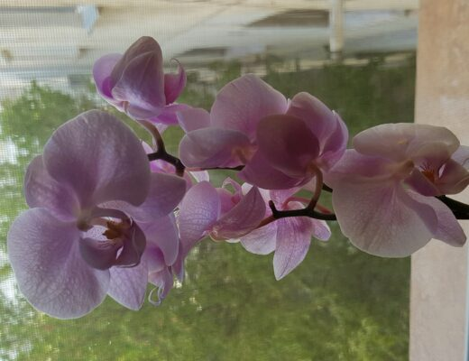 "Cu mulțumiri ""orhideei"" mele"